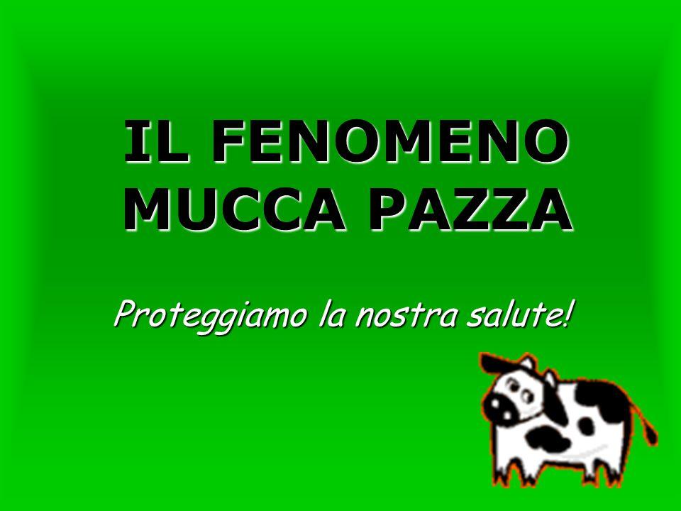 IL FENOMENO MUCCA PAZZA