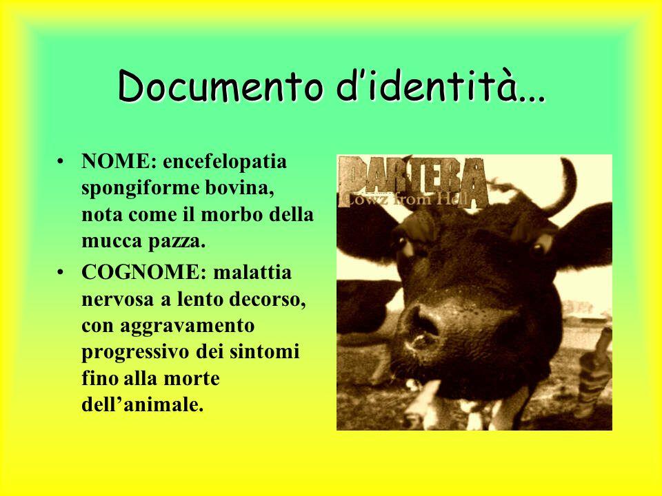 Documento d'identità... NOME: encefelopatia spongiforme bovina, nota come il morbo della mucca pazza.