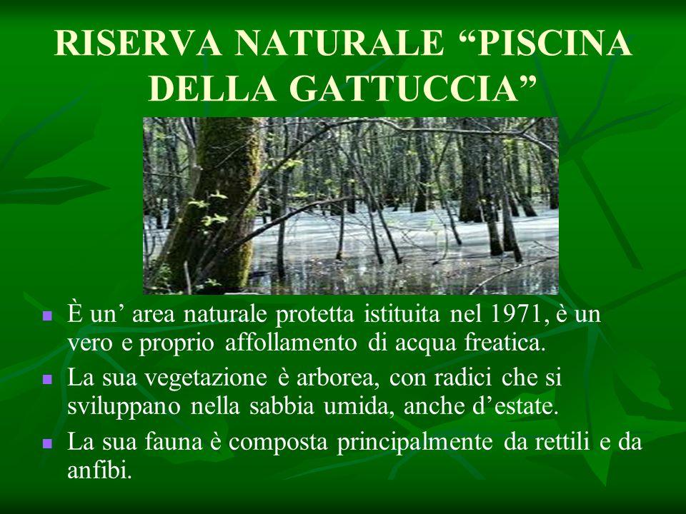 RISERVA NATURALE PISCINA DELLA GATTUCCIA