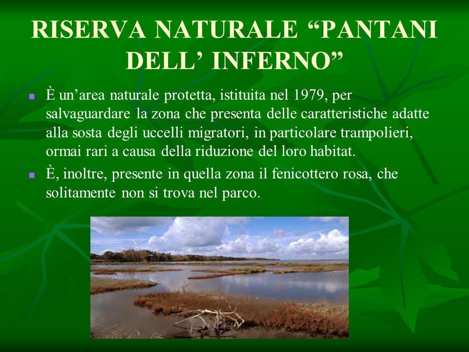 RISERVA NATURALE PANTANI DELL' INFERNO