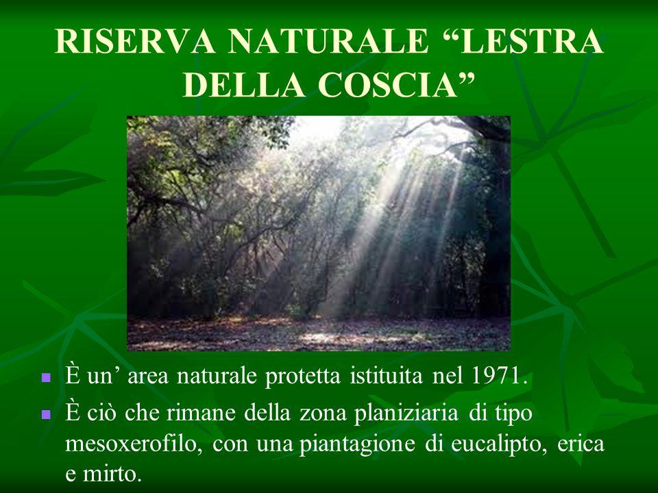RISERVA NATURALE LESTRA DELLA COSCIA