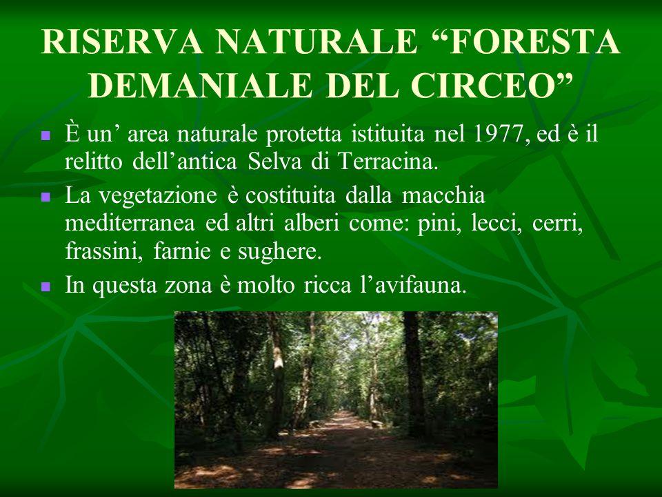 RISERVA NATURALE FORESTA DEMANIALE DEL CIRCEO