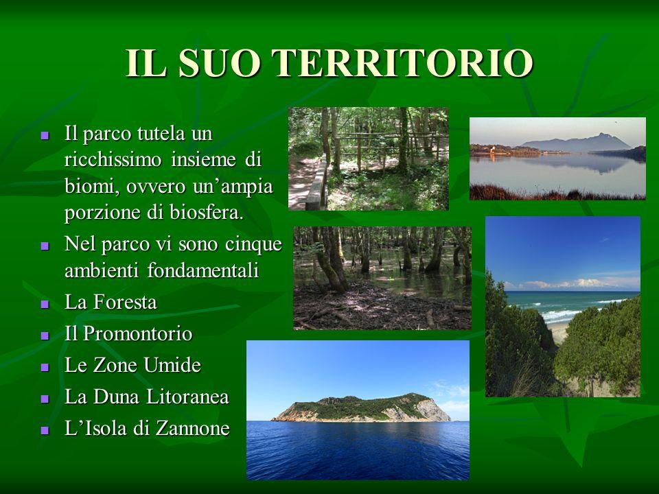 IL SUO TERRITORIO Il parco tutela un ricchissimo insieme di biomi, ovvero un'ampia porzione di biosfera.