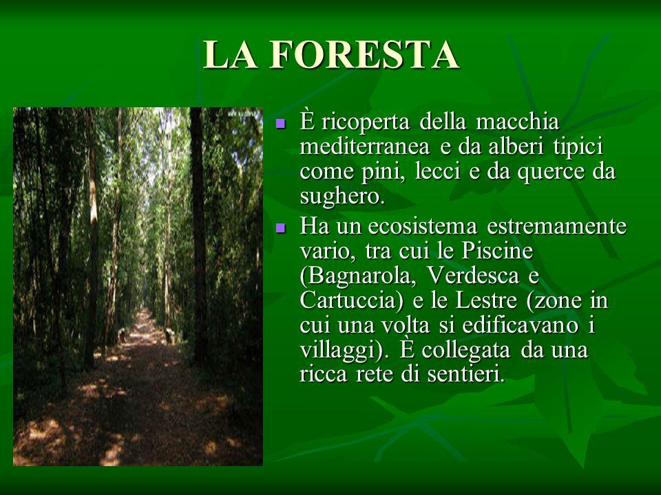 LA FORESTA È ricoperta della macchia mediterranea e da alberi tipici come pini, lecci e da querce da sughero.