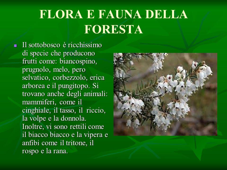 FLORA E FAUNA DELLA FORESTA
