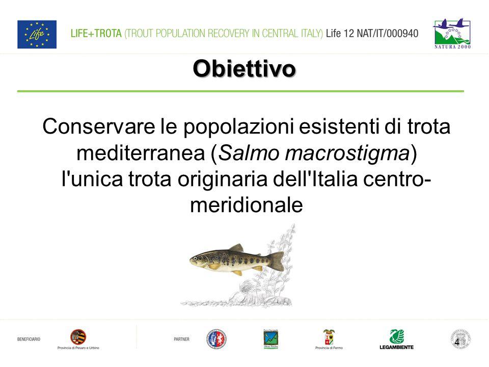 Obiettivo Conservare le popolazioni esistenti di trota mediterranea (Salmo macrostigma) l unica trota originaria dell Italia centro-meridionale.