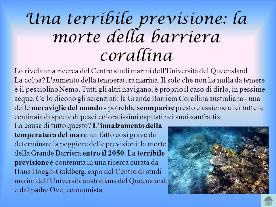 Una terribile previsione: la morte della barriera corallina