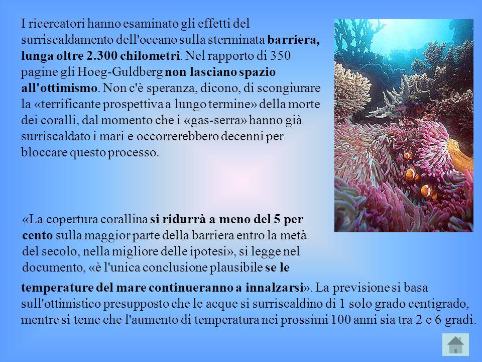I ricercatori hanno esaminato gli effetti del surriscaldamento dell oceano sulla sterminata barriera, lunga oltre 2.300 chilometri. Nel rapporto di 350 pagine gli Hoeg-Guldberg non lasciano spazio all ottimismo. Non c è speranza, dicono, di scongiurare la «terrificante prospettiva a lungo termine» della morte dei coralli, dal momento che i «gas-serra» hanno già surriscaldato i mari e occorrerebbero decenni per bloccare questo processo.