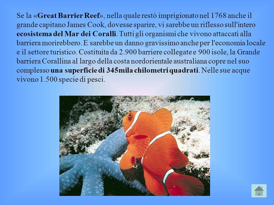 Se la «Great Barrier Reef», nella quale restò imprigionato nel 1768 anche il grande capitano James Cook, dovesse sparire, vi sarebbe un riflesso sull intero ecosistema del Mar dei Coralli.