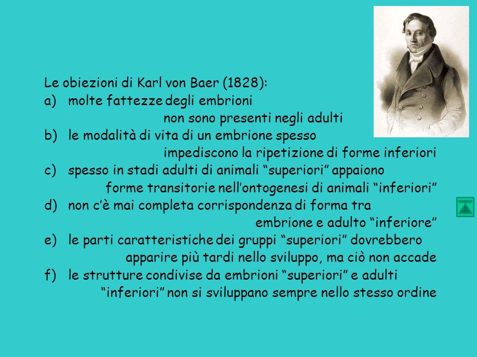 Le obiezioni di Karl von Baer (1828):