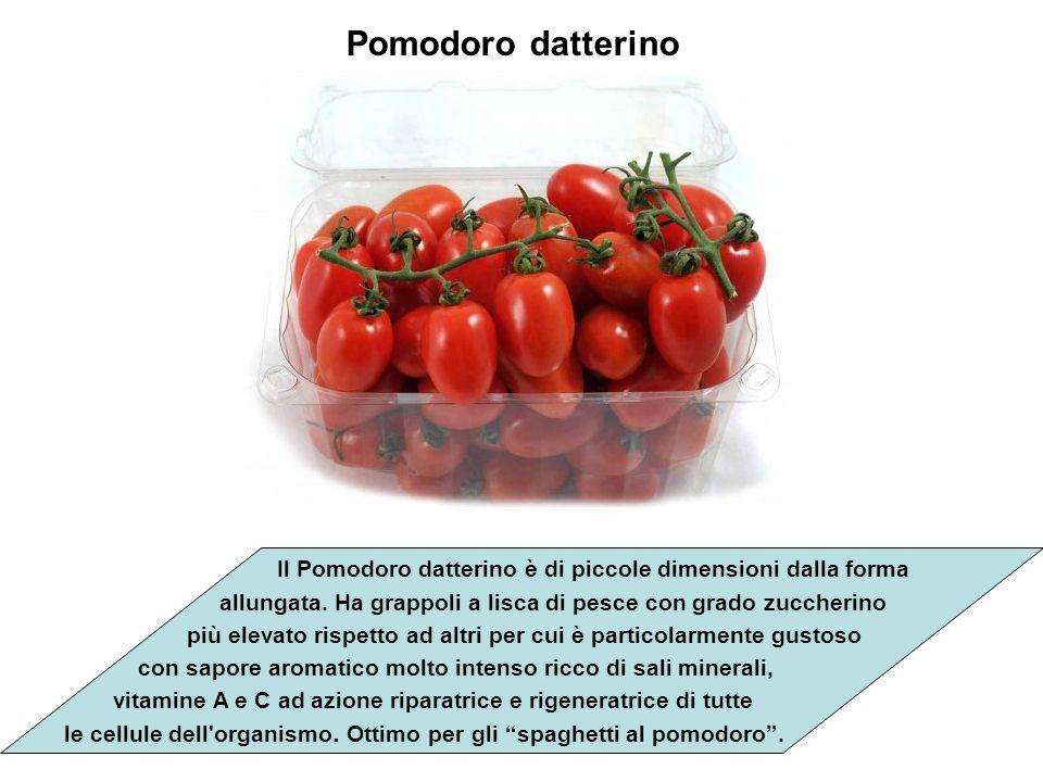 Pomodoro datterino Il Pomodoro datterino è di piccole dimensioni dalla forma. allungata. Ha grappoli a lisca di pesce con grado zuccherino.