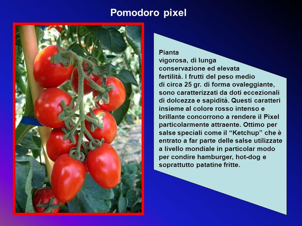 Pomodoro pixel Pianta vigorosa, di lunga conservazione ed elevata