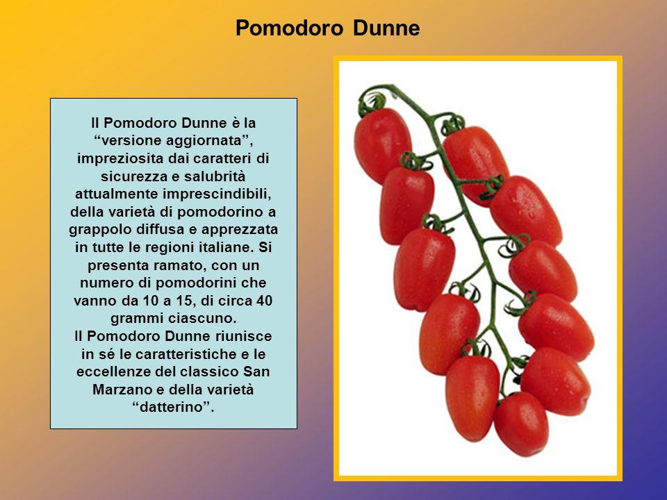 Pomodoro Dunne