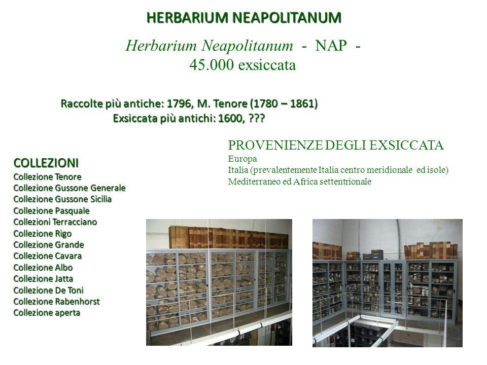 HERBARIUM NEAPOLITANUM