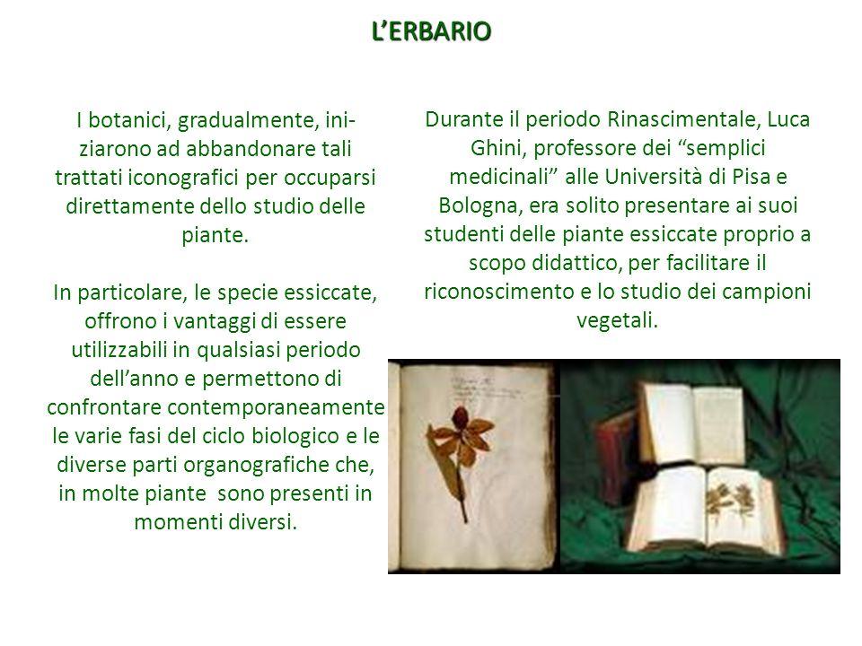 L'ERBARIO I botanici, gradualmente, ini-ziarono ad abbandonare tali trattati iconografici per occuparsi direttamente dello studio delle piante.