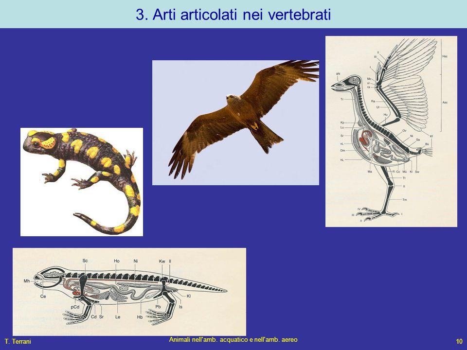 3. Arti articolati nei vertebrati