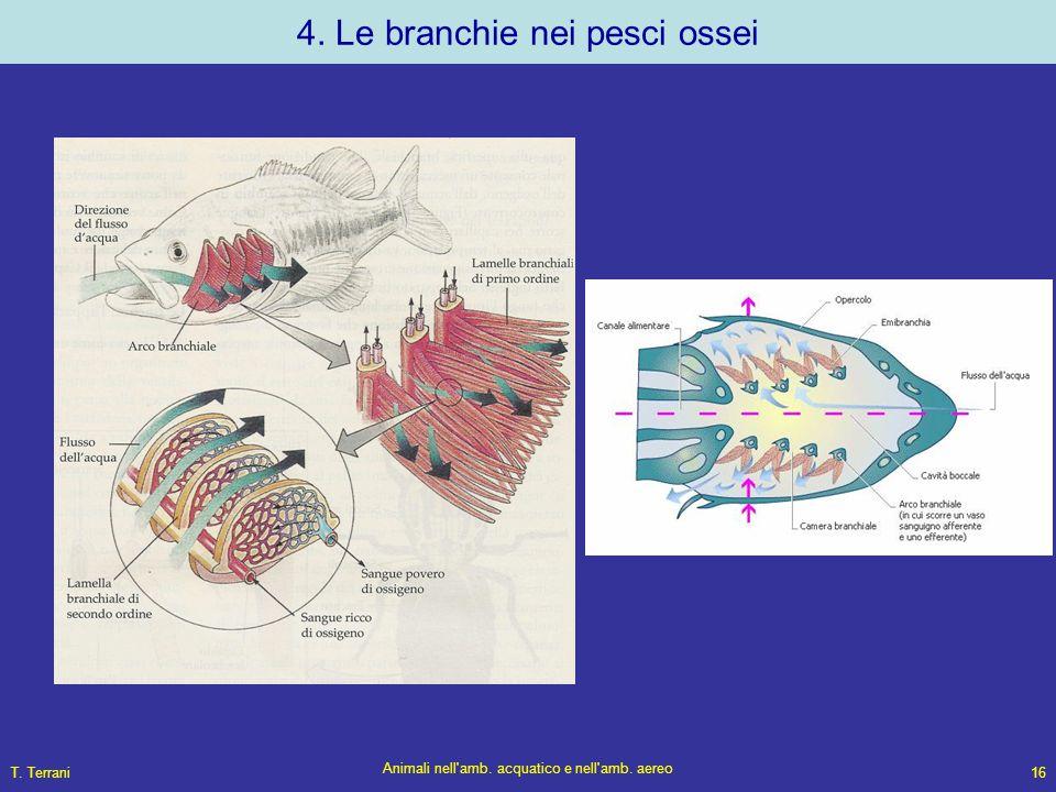 4. Le branchie nei pesci ossei