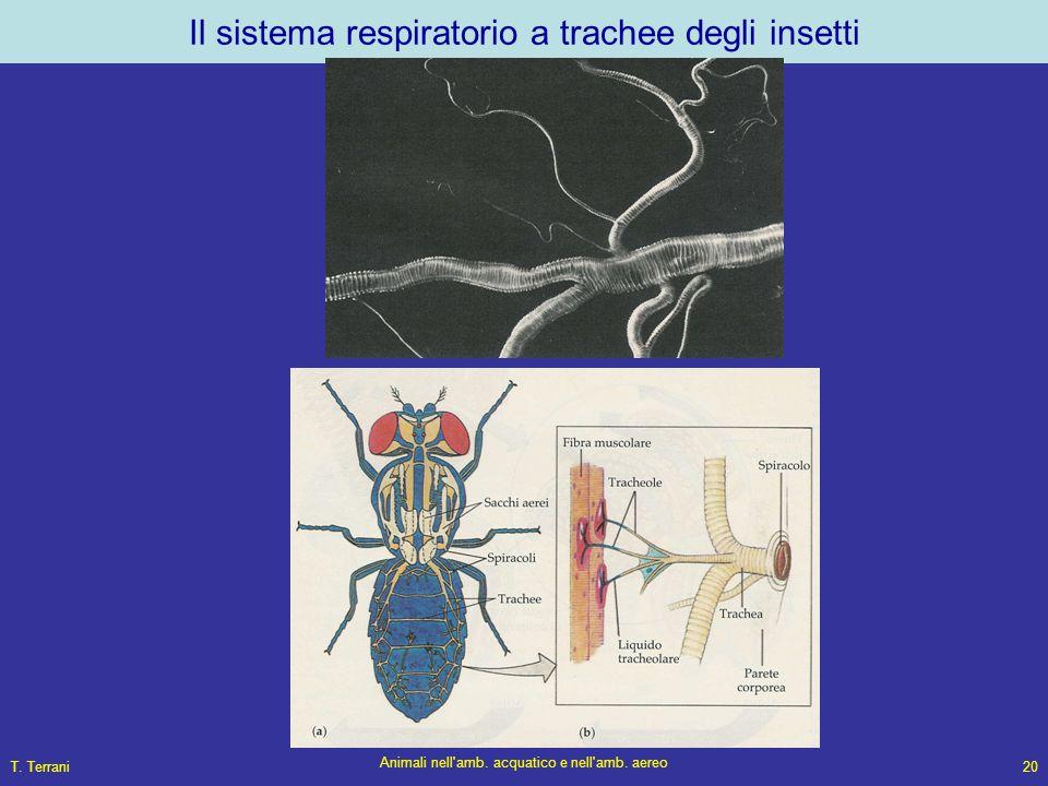 Il sistema respiratorio a trachee degli insetti