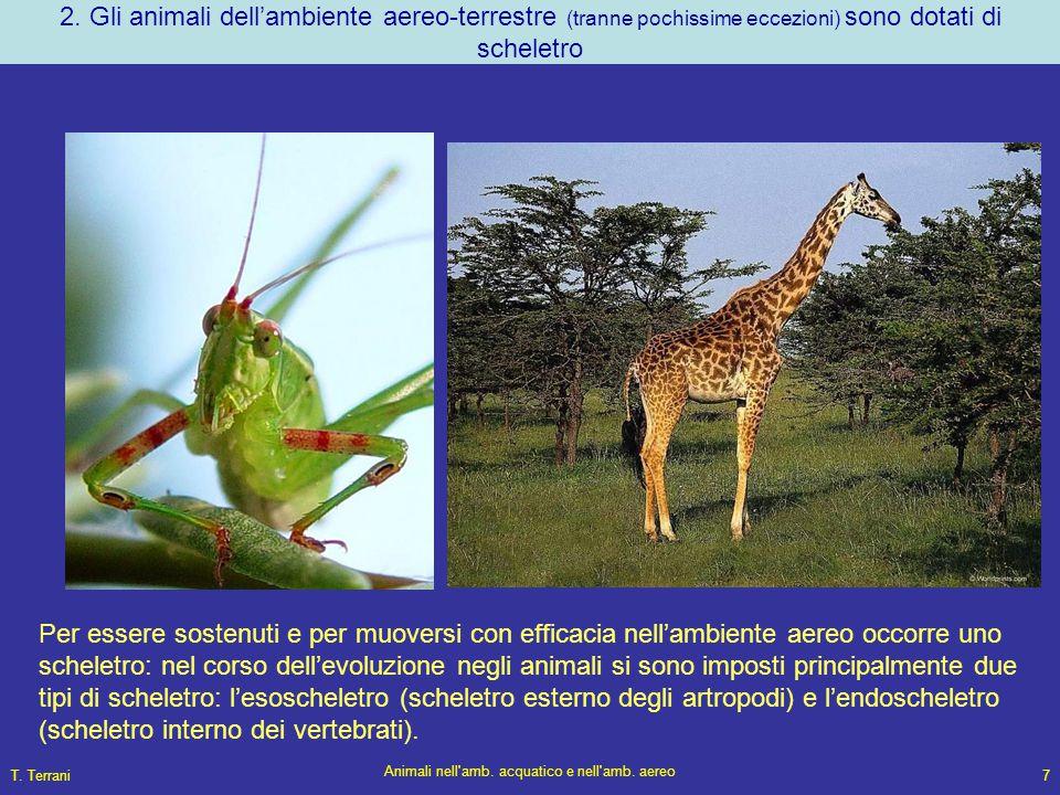 Animali nell amb. acquatico e nell amb. aereo