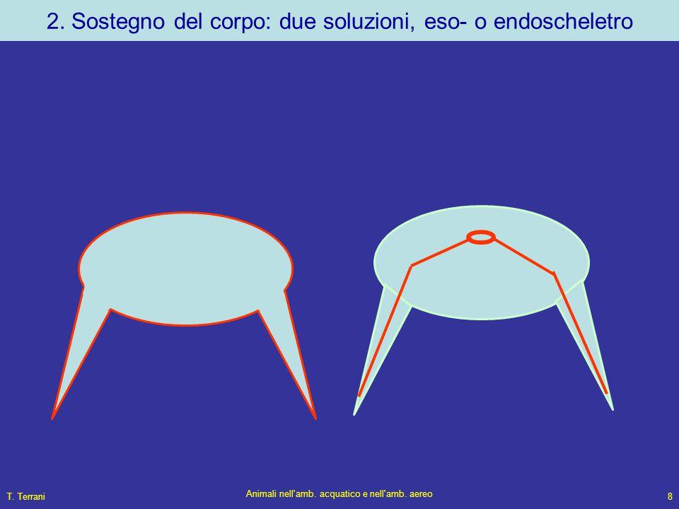 2. Sostegno del corpo: due soluzioni, eso- o endoscheletro