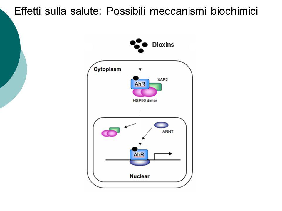 Effetti sulla salute: Possibili meccanismi biochimici