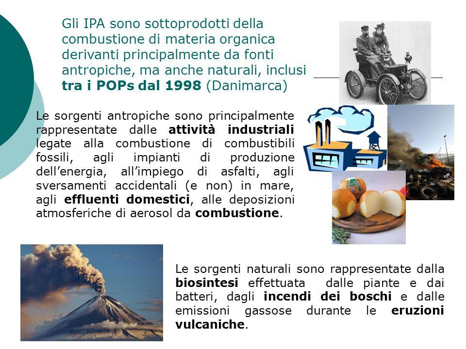Gli IPA sono sottoprodotti della combustione di materia organica derivanti principalmente da fonti antropiche, ma anche naturali, inclusi tra i POPs dal 1998 (Danimarca)