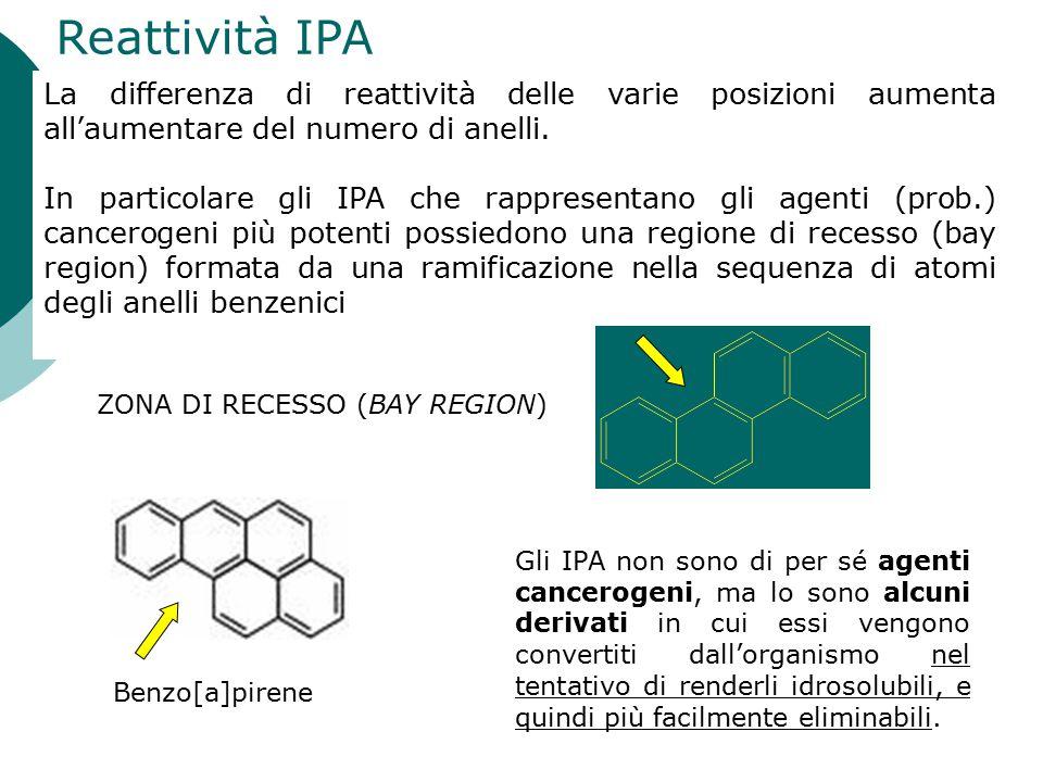 Reattività IPA La differenza di reattività delle varie posizioni aumenta all'aumentare del numero di anelli.