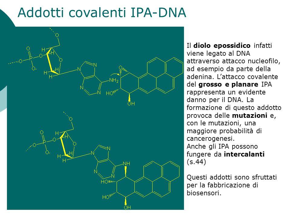 Addotti covalenti IPA-DNA