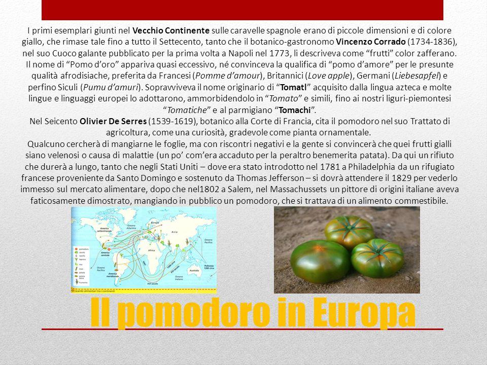 I primi esemplari giunti nel Vecchio Continente sulle caravelle spagnole erano di piccole dimensioni e di colore giallo, che rimase tale fino a tutto il Settecento, tanto che il botanico-gastronomo Vincenzo Corrado (1734-1836), nel suo Cuoco galante pubblicato per la prima volta a Napoli nel 1773, li descriveva come frutti color zafferano. Il nome di Pomo d'oro appariva quasi eccessivo, né convinceva la qualifica di pomo d'amore per le presunte qualità afrodisiache, preferita da Francesi (Pomme d'amour), Britannici (Love apple), Germani (Liebesapfel) e perfino Siculi (Pumu d'amuri). Sopravviveva il nome originario di Tomatl acquisito dalla lingua azteca e molte lingue e linguaggi europei lo adottarono, ammorbidendolo in Tomato e simili, fino ai nostri liguri-piemontesi Tomatiche e al parmigiano Tomachi . Nel Seicento Olivier De Serres (1539-1619), botanico alla Corte di Francia, cita il pomodoro nel suo Trattato di agricoltura, come una curiosità, gradevole come pianta ornamentale. Qualcuno cercherà di mangiarne le foglie, ma con riscontri negativi e la gente si convincerà che quei frutti gialli siano velenosi o causa di malattie (un po' com'era accaduto per la peraltro benemerita patata). Da qui un rifiuto che durerà a lungo, tanto che negli Stati Uniti – dove era stato introdotto nel 1781 a Philadelphia da un rifugiato francese proveniente da Santo Domingo e sostenuto da Thomas Jefferson – si dovrà attendere il 1829 per vederlo immesso sul mercato alimentare, dopo che nel1802 a Salem, nel Massachussets un pittore di origini italiane aveva faticosamente dimostrato, mangiando in pubblico un pomodoro, che si trattava di un alimento commestibile.
