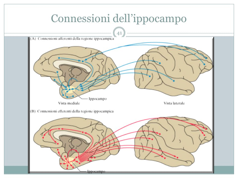 Connessioni dell'ippocampo