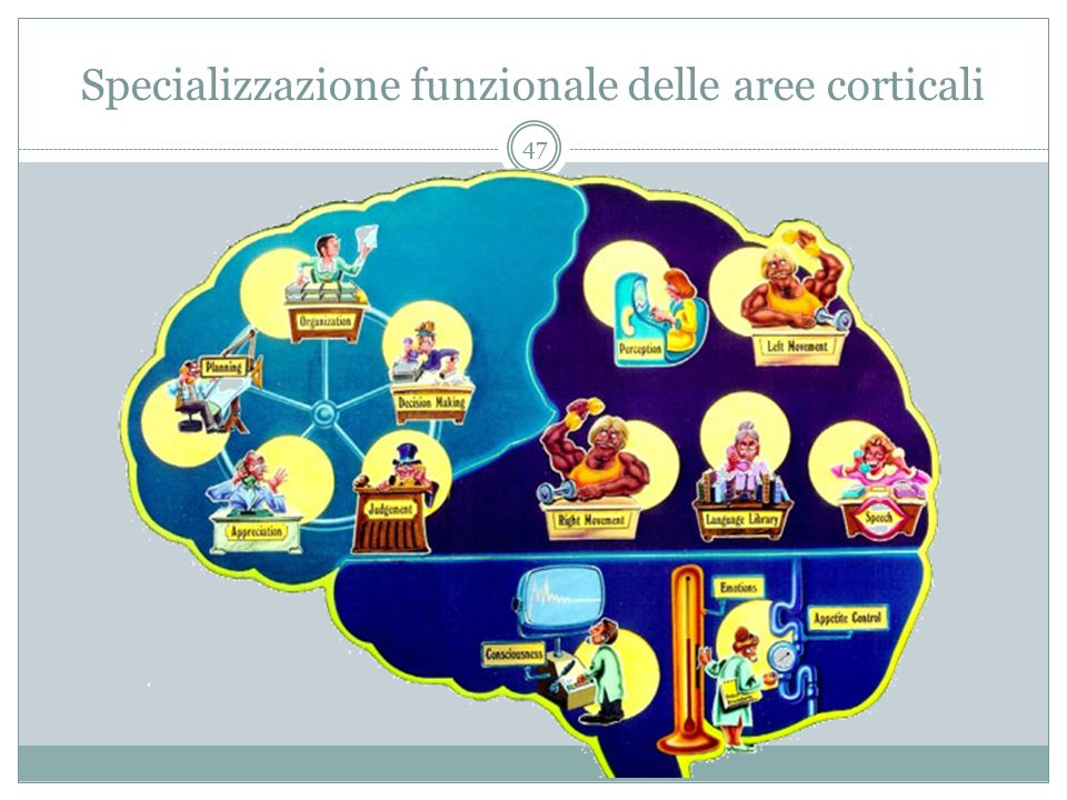 Specializzazione funzionale delle aree corticali