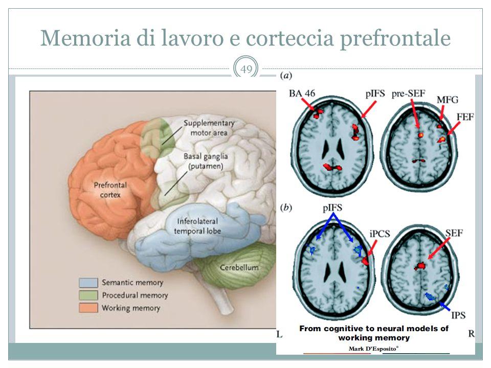 Memoria di lavoro e corteccia prefrontale