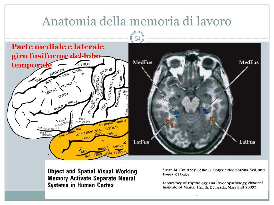 Anatomia della memoria di lavoro