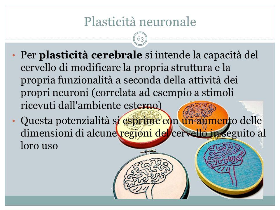 Plasticità neuronale