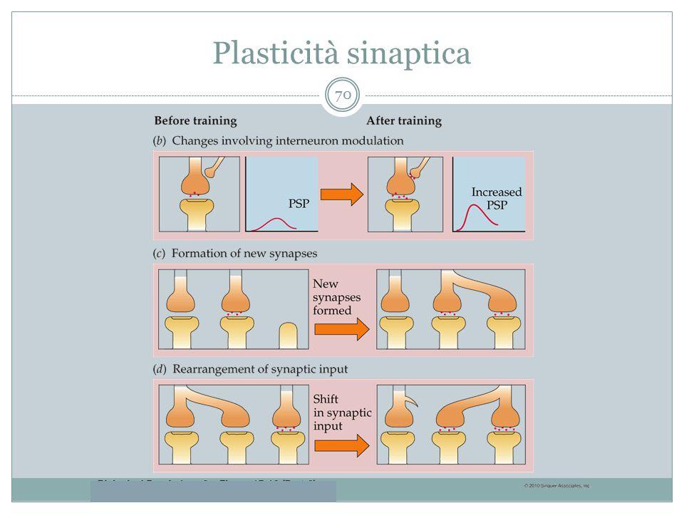 Plasticità sinaptica