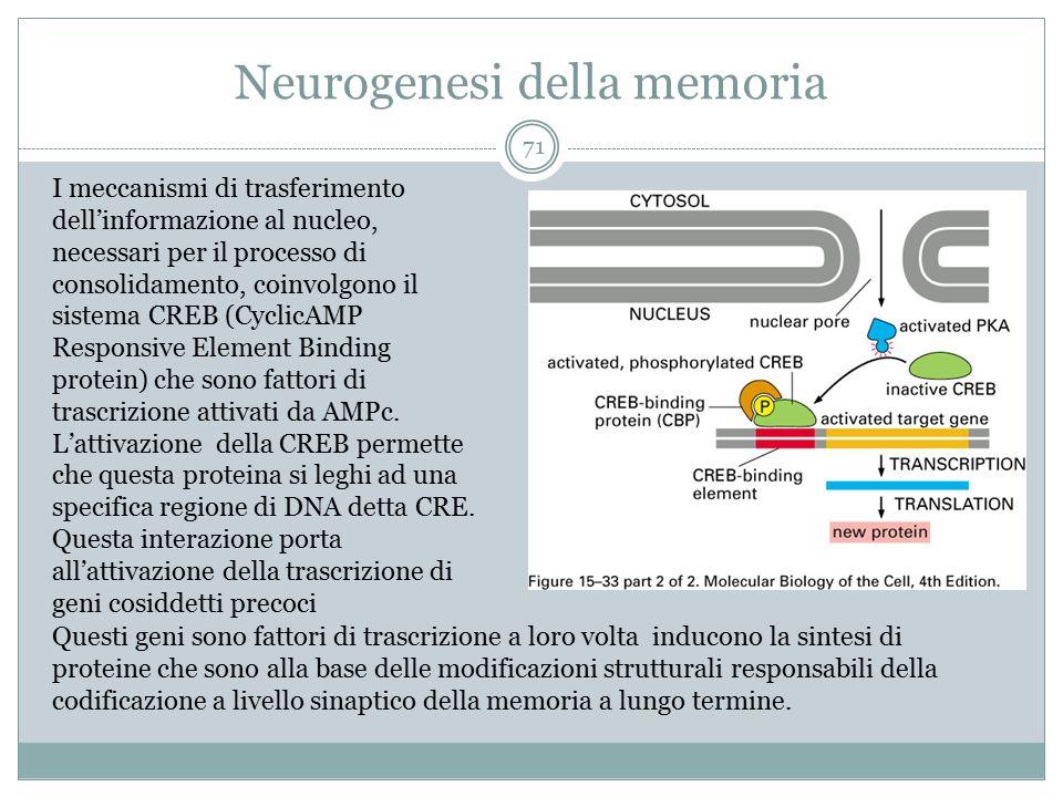 Neurogenesi della memoria