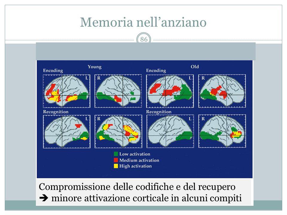 Memoria nell'anziano Compromissione delle codifiche e del recupero  minore attivazione corticale in alcuni compiti.