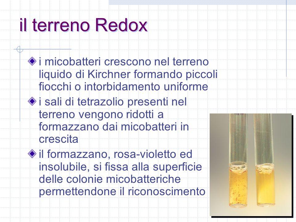 il terreno Redox i micobatteri crescono nel terreno liquido di Kirchner formando piccoli fiocchi o intorbidamento uniforme.