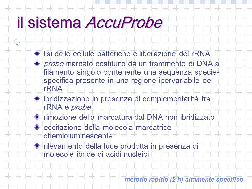 il sistema AccuProbe lisi delle cellule batteriche e liberazione del rRNA.