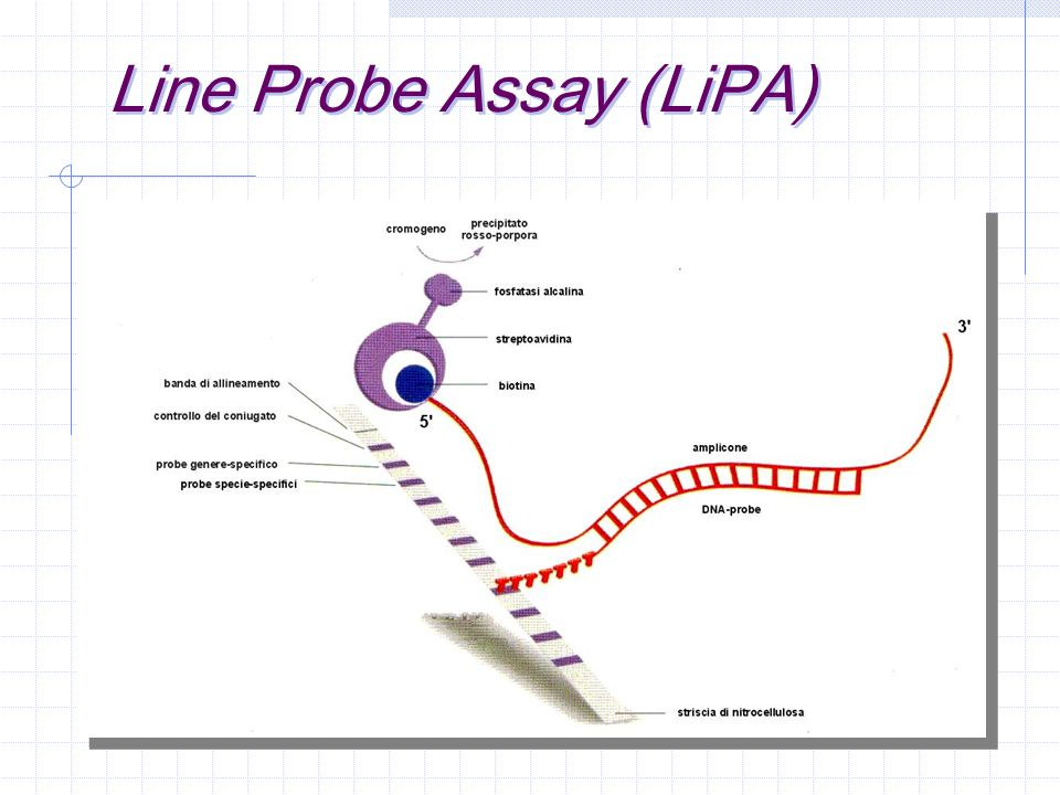 Line Probe Assay (LiPA)