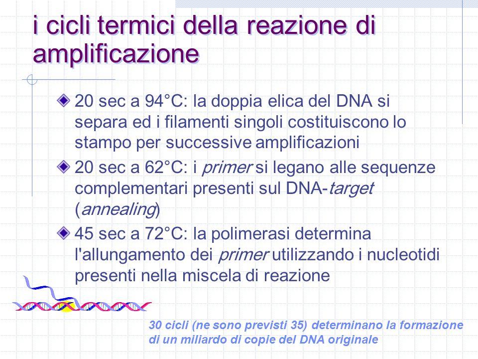 i cicli termici della reazione di amplificazione