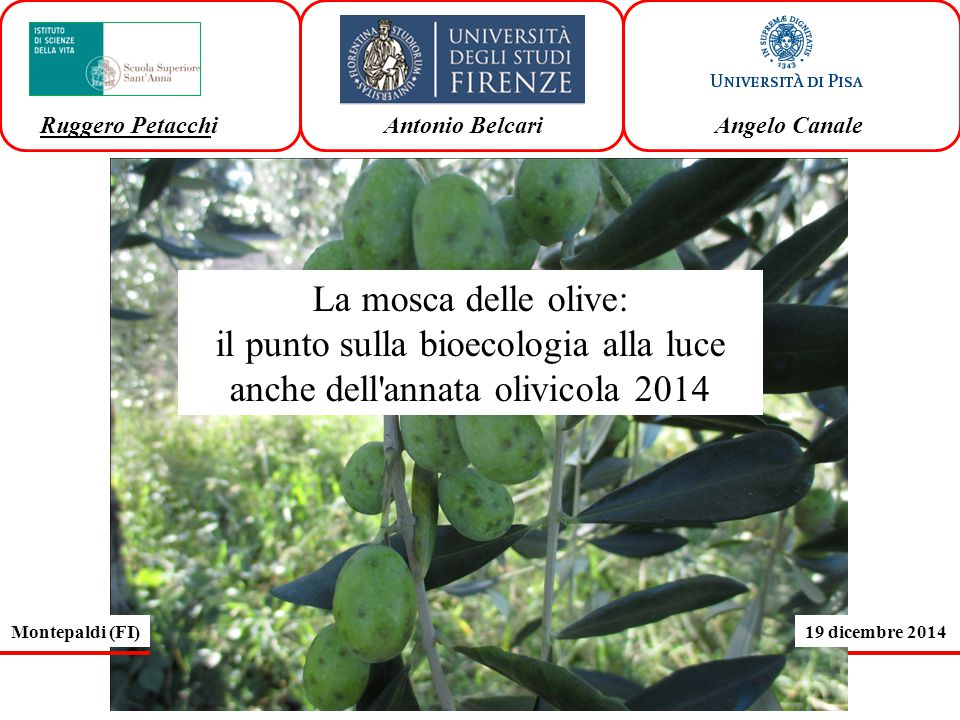 il punto sulla bioecologia alla luce anche dell annata olivicola 2014