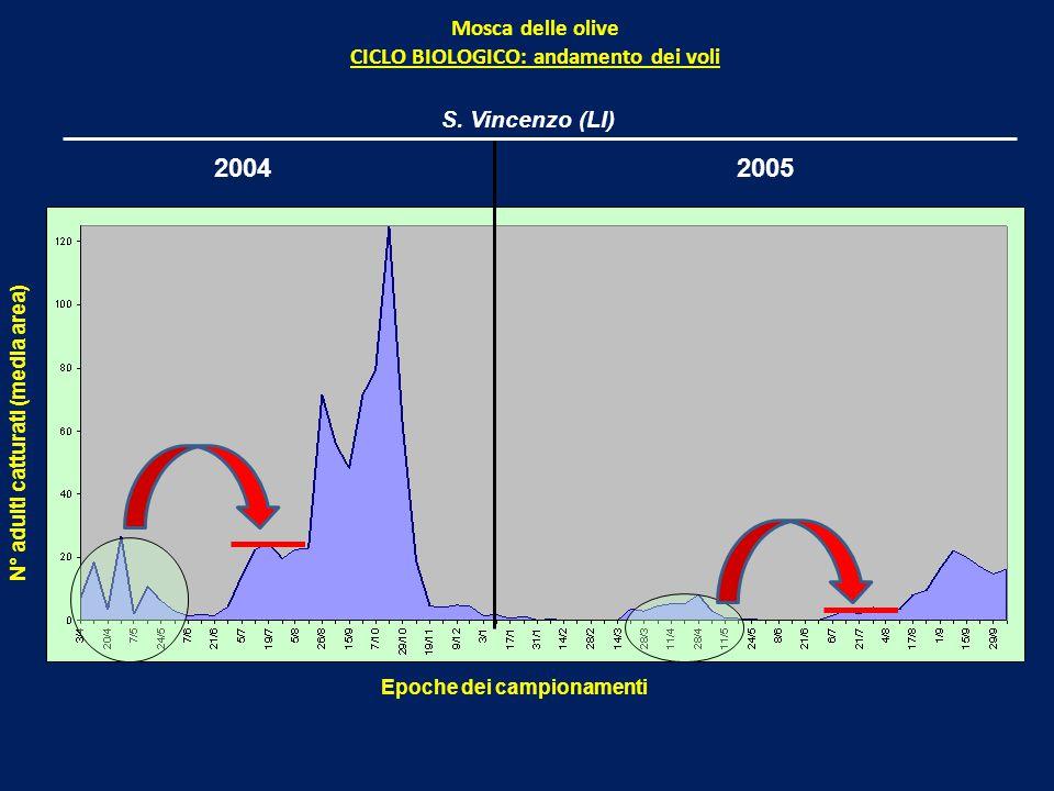 2004 2005 Mosca delle olive CICLO BIOLOGICO: andamento dei voli