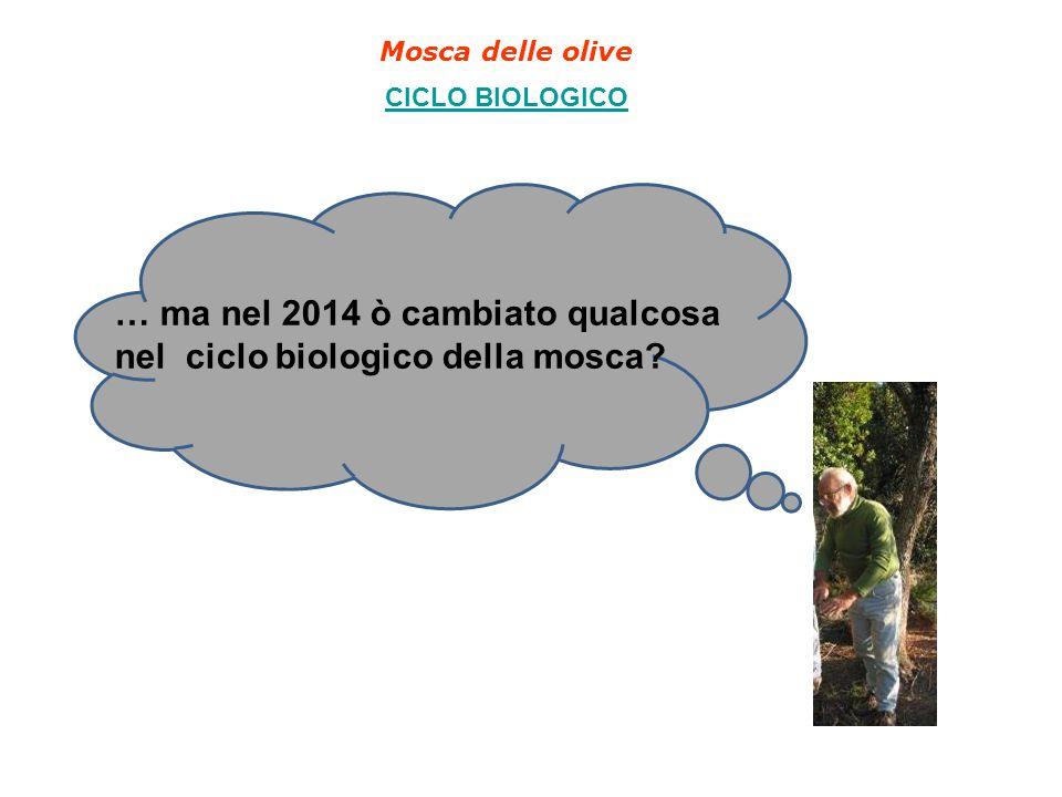 … ma nel 2014 ò cambiato qualcosa nel ciclo biologico della mosca