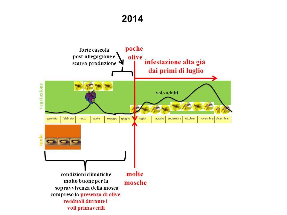 2014 poche olive infestazione alta già dai primi di luglio molte