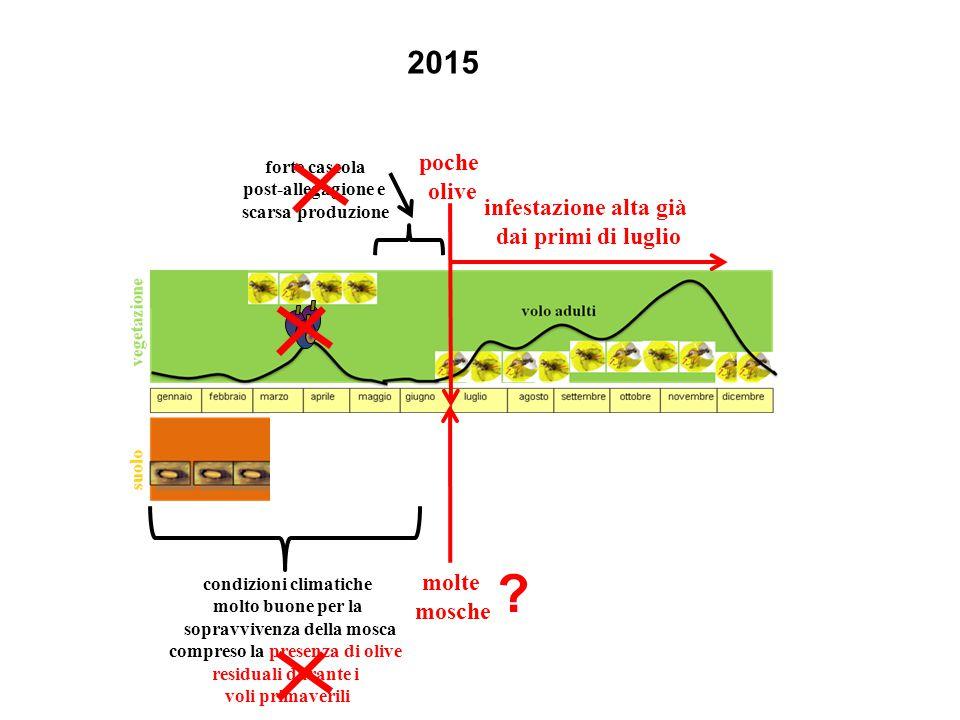 2015 poche olive infestazione alta già dai primi di luglio molte