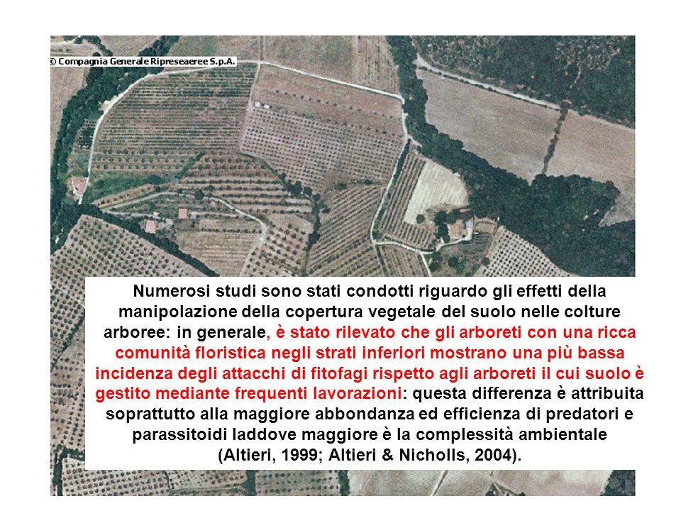 (Altieri, 1999; Altieri & Nicholls, 2004).