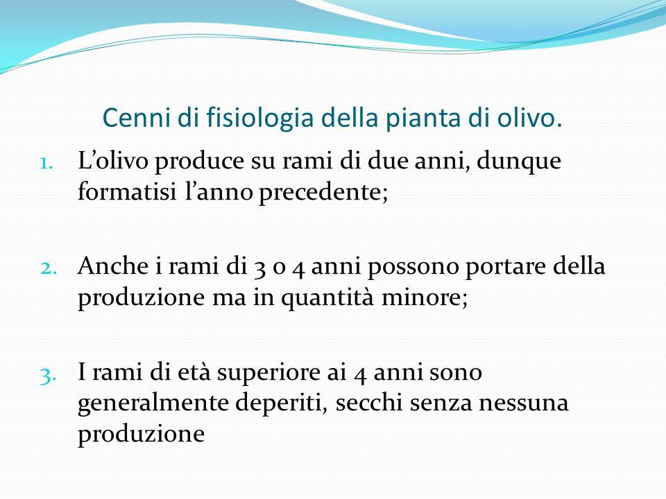 Cenni di fisiologia della pianta di olivo.