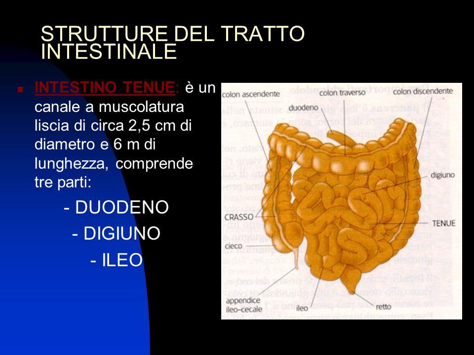 STRUTTURE DEL TRATTO INTESTINALE