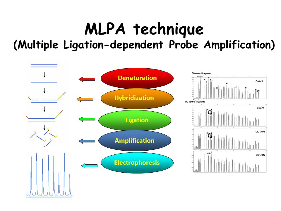 MLPA technique (Multiple Ligation-dependent Probe Amplification)